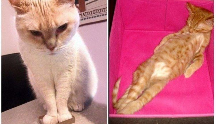 Kodėl katės negali atsispirti dėžutėms?