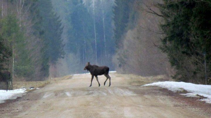 Ragina medžiotojus keleriems metams padėti šautuvus, kad Lietuvos fauna atsigautų