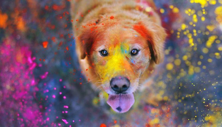 Violetine spalva šunelį nudažiusi moteris pasmerkė jį tikram pragarui: niekas nesitikėjo, kad vargšelis išgyvens