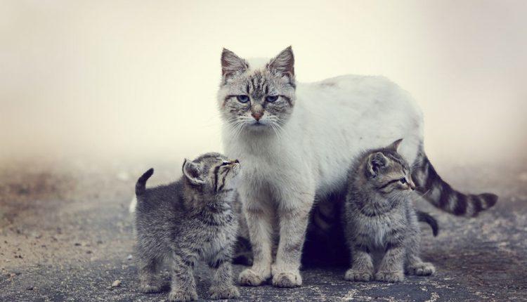 Katė atėjo į kavinę prašyti žmonių pagalbos, jos mažyliai šalo lauke